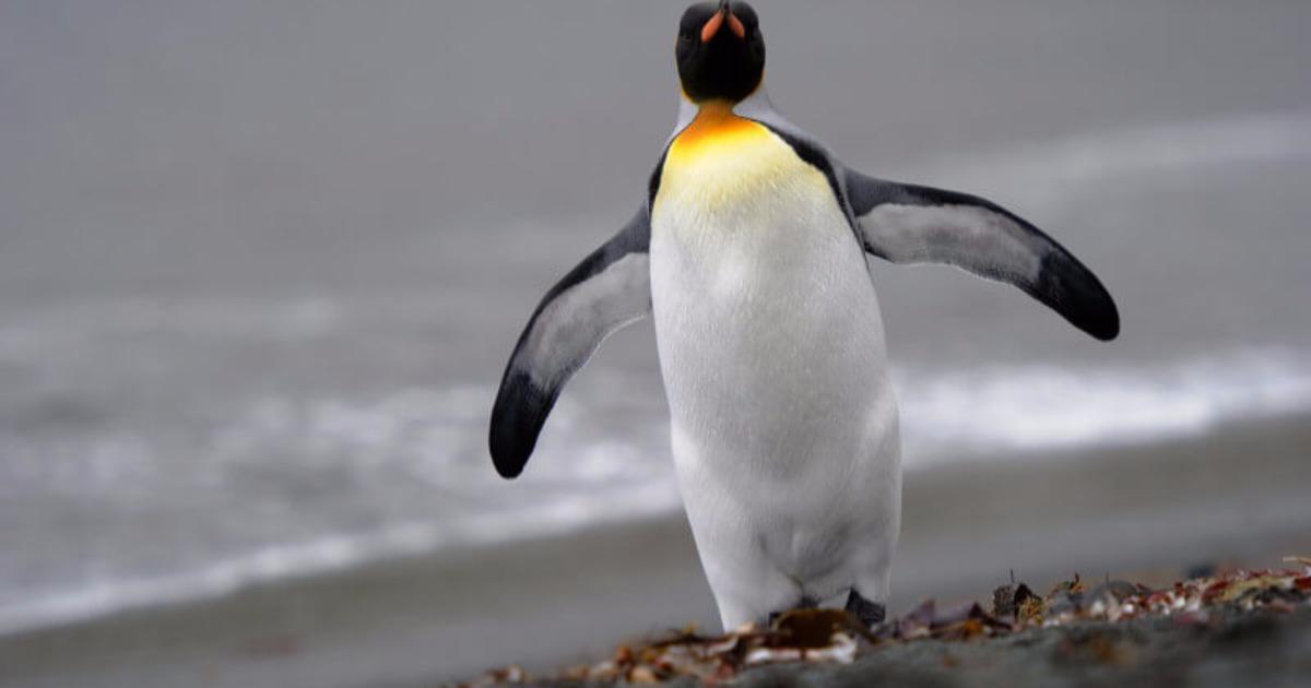 Τι είναι το Google Penguin;